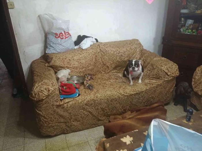 חזן ספה וכלב