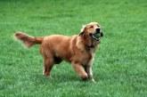 אחרי שנים נתפס (סוף-סוף) כלב שעשה צרכיו בפארק הזהב