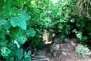 ג'ונגל בליבה של קריית שמונה