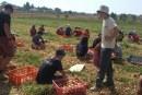 חופש גדול עם החקלאים