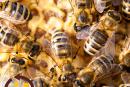 הכל דבש: 16 מוצרי כוורת לטיפול במגוון בעיות בריאות