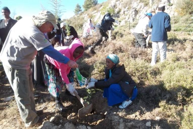 """מאתיופיה לנטיעות ט""""ו בשבט"""