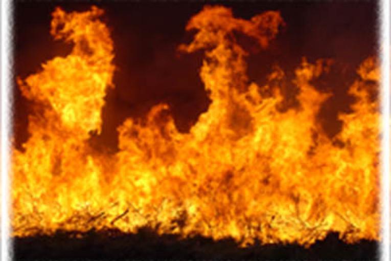 שגרת הפרוטקשיין: הלילה 5 כלי רכב הוצתו בוורד הגליל