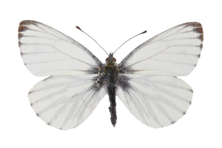 כנפיים/ליאורה בן אשר