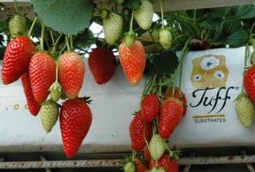 חברות תעשייה וחקלאות מהאזור יציגו מוצרים מתקדמים בתערוכה החקלאית הגדולה בישראל