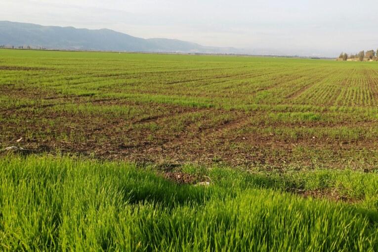 בגליל מזהירים:  נייבש אלפי דונם  של מטעים ושדות