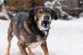 משרד הבריאות: כלבה הנגועה בכלבת נשכה אנשים בקריית שמונה