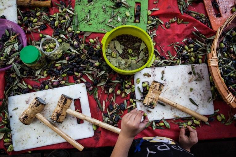 עץ אחד, שפע של תרבויות פסטיבל ימי ענף הזית ה-23