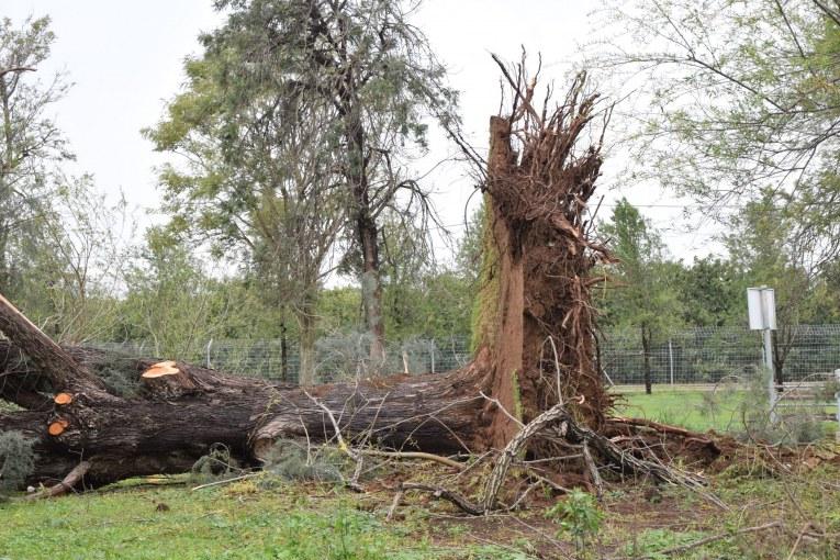גלריה: קריסת עצים בקיבוץ דפנה והסביבה