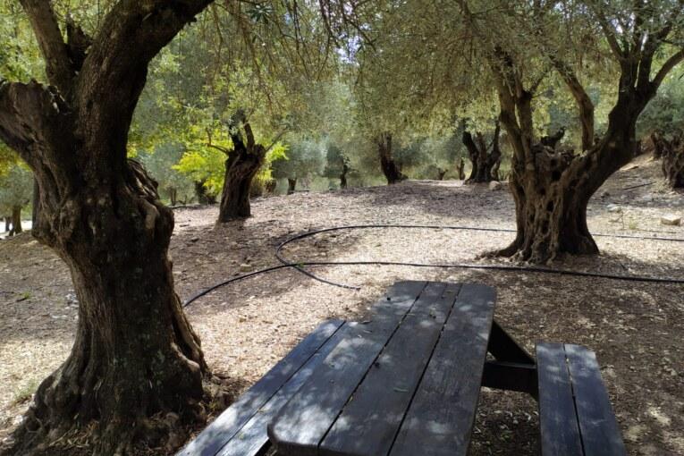 """מאירים את היערות! אשכולות וקק""""ל מציגים: אירועי חנוכה בגליל"""